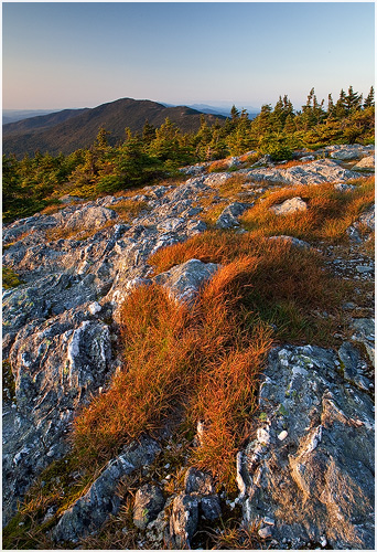 Alpine grasses glow with late day light on Mount Abraham in northern Vermont.