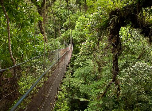 Costa Rica canopy walk