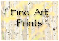 Purchase Fine Art Prints