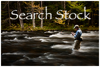 Searchable Stock Photography Archive