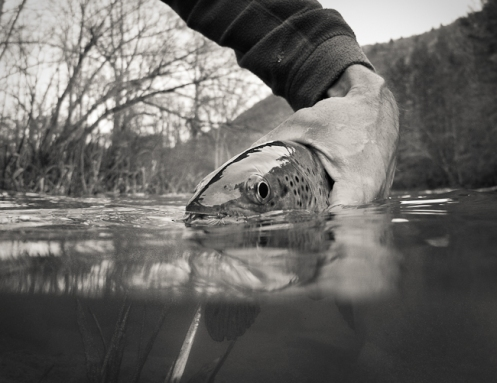 underwater picture of trout