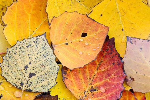vermont fall foliage image