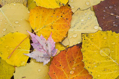 close-up photo of colorful fall leaves